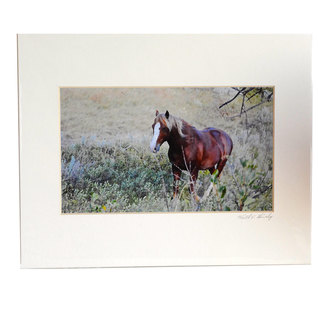 Keith Shively Photo - Horse